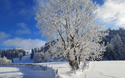 Les grands espaces des Franches-Montagnes